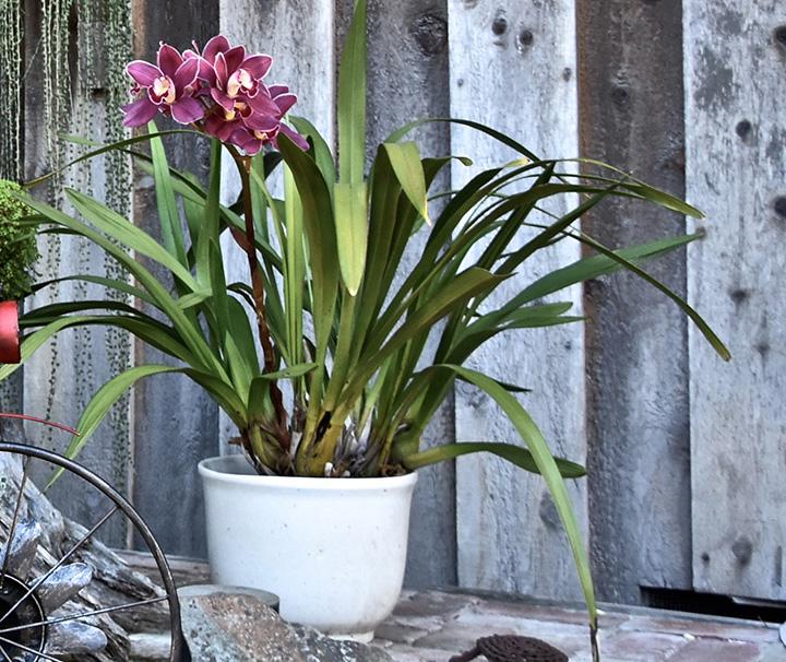 Beautiful flowers in pot