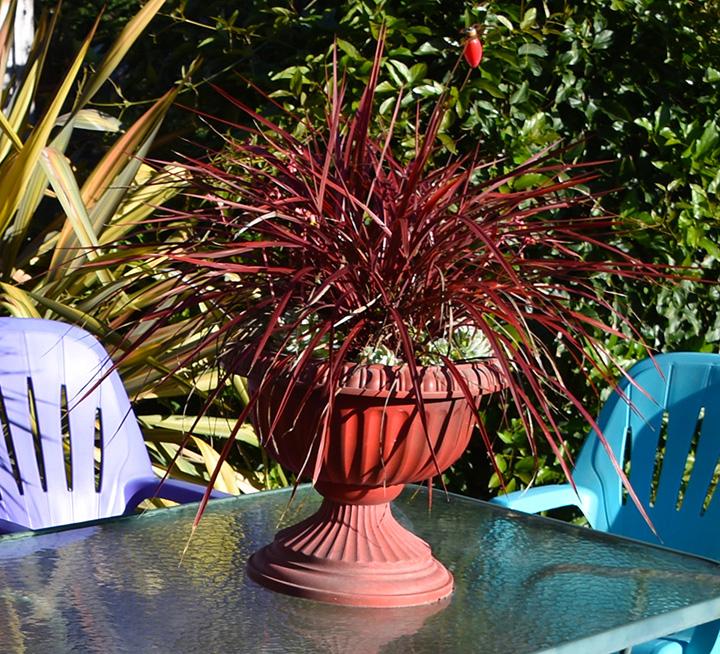 Floral arrangement in a red urn